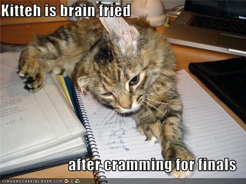 Cat-studied-for-finals
